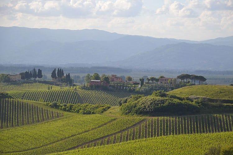 Filari di vigneti caratterizzano il paesaggio tipico di Toscana