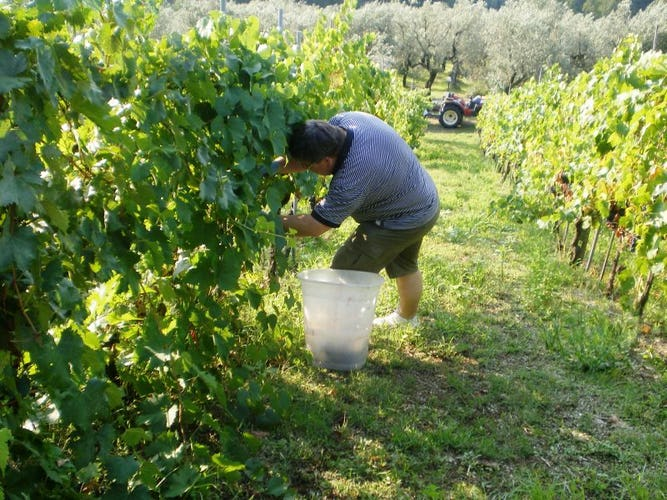 Ask about the wine production at Agriturismo Casa Italia