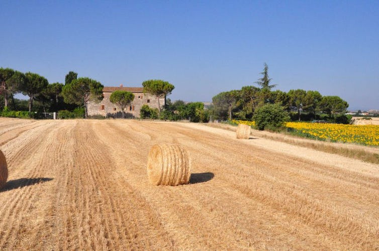 Agriturismo Il Molinello - Immersi nel tipico paesaggio toscano e delle crete senesi