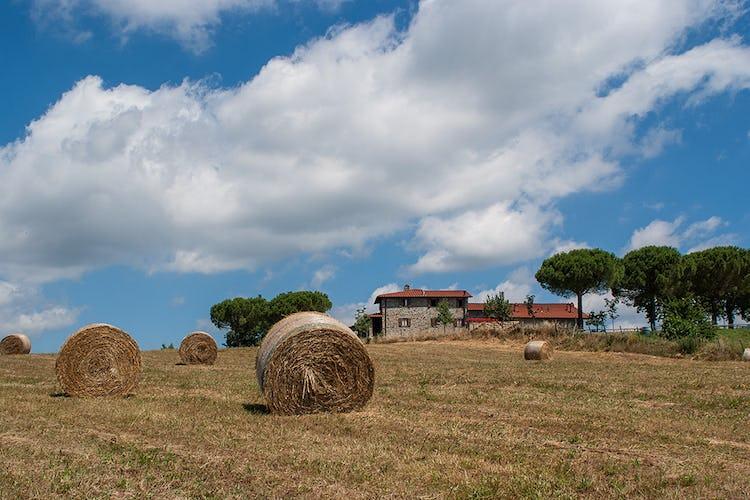 Agriturismo La Collina Delle Stelle - lo scorcio tipico del paesaggio toscano quando si trasforma nel periodo della raccolta del fieno