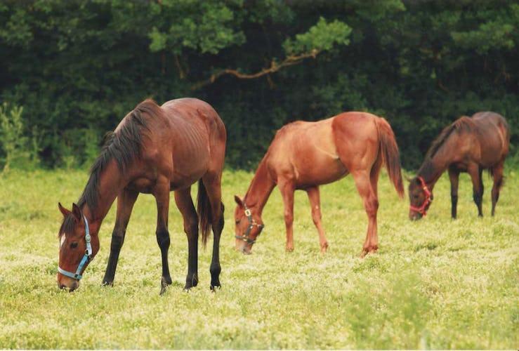 The horses of the farmhouse at Agriturismo La Selva