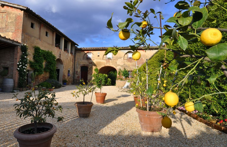 Agriturismo Marciano - Courtyard with Lemon Trees