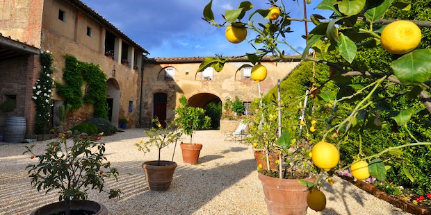 A true Tuscan agritourism with vineyards, olive grooves and more
