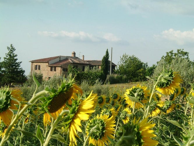 Agriturismo Casa dei Girasoli - surrounded by sunflowers
