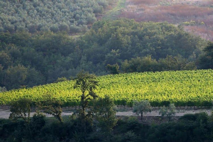 Castello La Leccia - un paesaggio fatto di colline ricoperte da filari di oliveti e vigneti circonda questo luogo ameno
