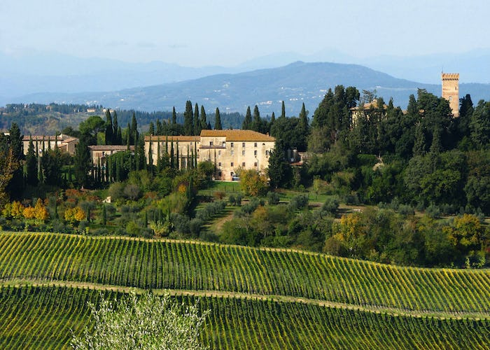 Castello Sonnino - the vineyards