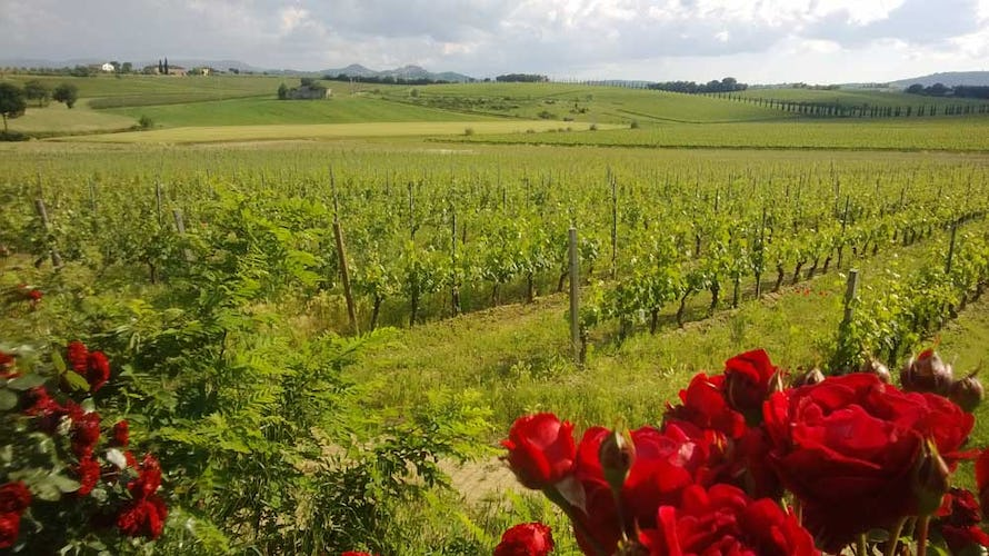 Over 60 hectacres of land make up the functional farm Il Greppo