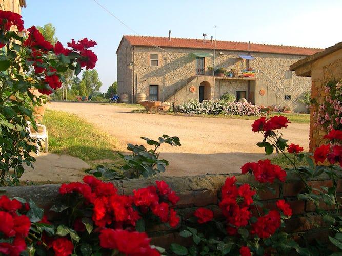 La Nuova Valentina - Fattoria nella Toscana