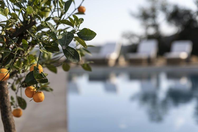 Dettagli visti dalla piscina di Pancolina