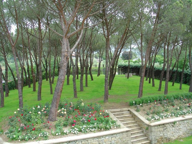 The pine forest surrounding the country villa