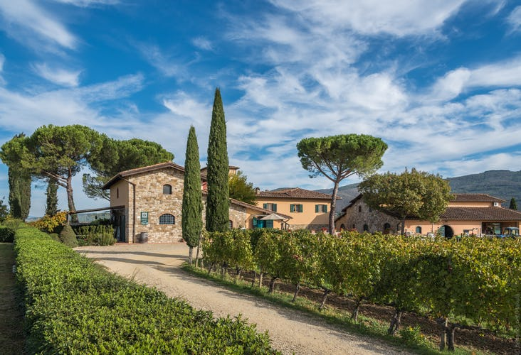 Fattoria Viticcio Rental Apartments & Vineyard: great photo opportunities